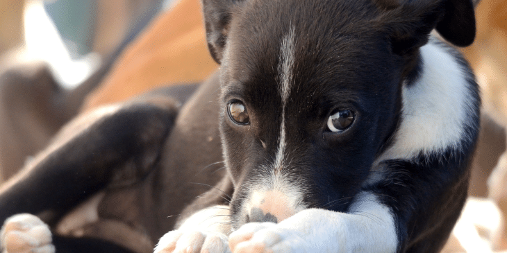 Why Do Dogs Eat Hair and How Can I Stop It?
