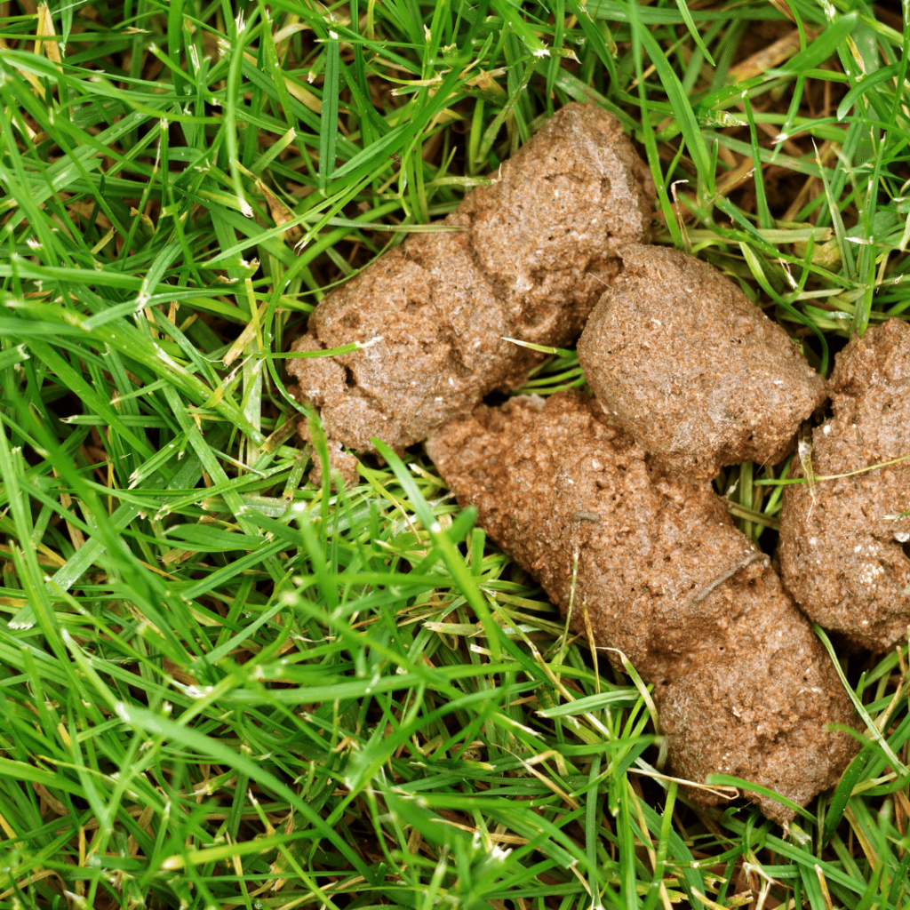 Dog Poop Color Meaning – Here's What Each Color Means