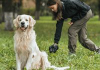 Dog Poop Color Meaning: What's Normal and What Isn't?