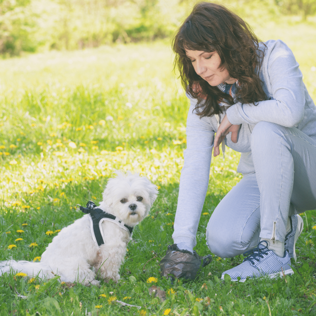 How to Assess Your Dog's Poop The Four Cs of Dog Poop