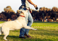 7 Questions to Ask a Dog Trainer Before You Hire